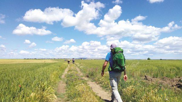 Un tratto del Cammino Materano